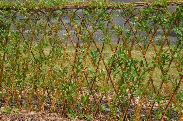 Tuinblog de wiltfang