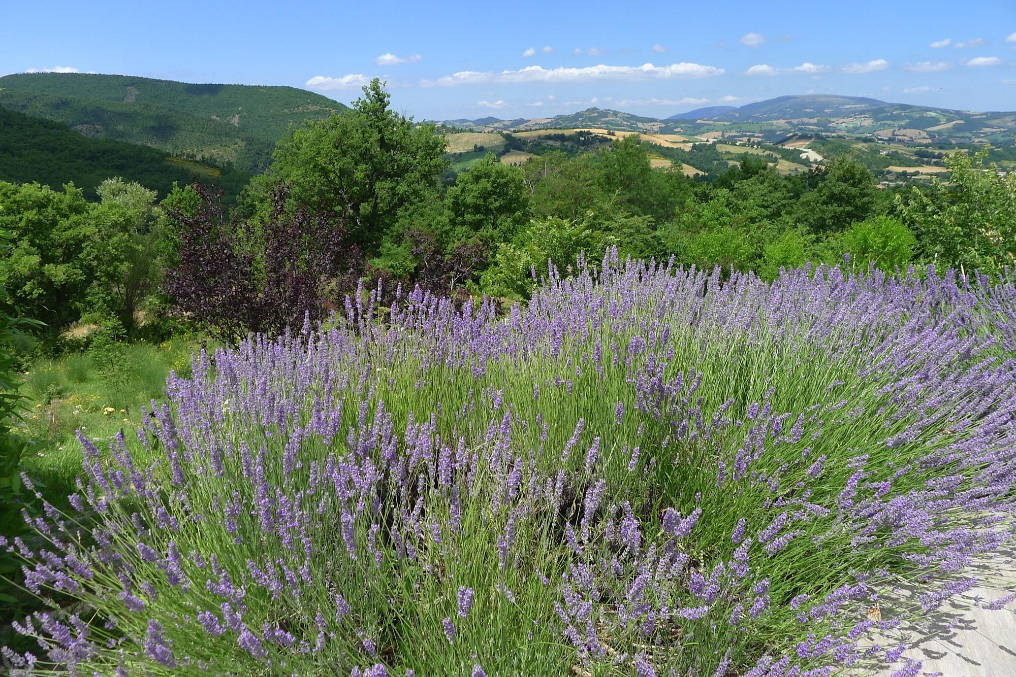 Juli 2014: Villa Nesplolo - tuinieren in terra cotta