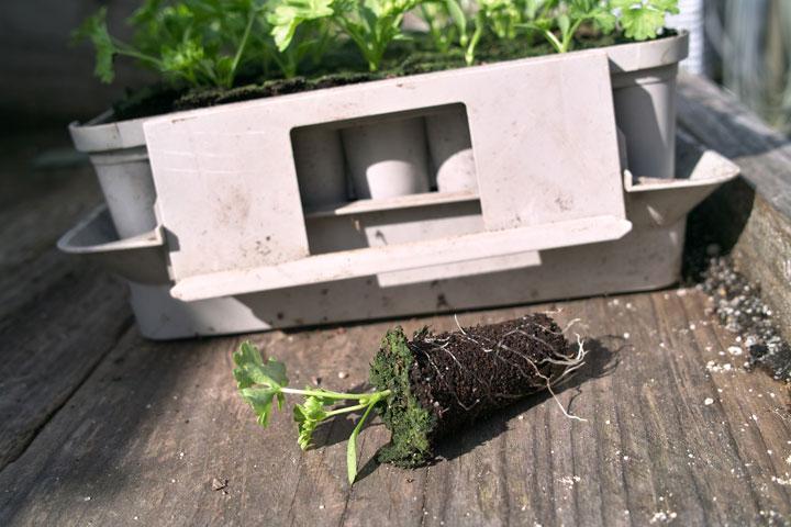 Verspenen, uitplanten of uitdunnen?